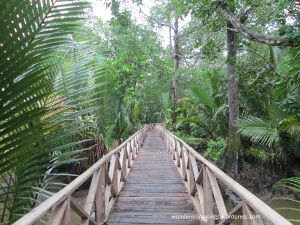 Dhani Nallah Mangrove walkway