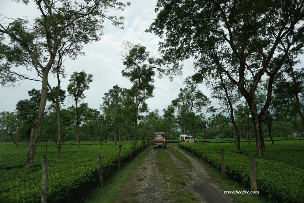 way-to-gorumara