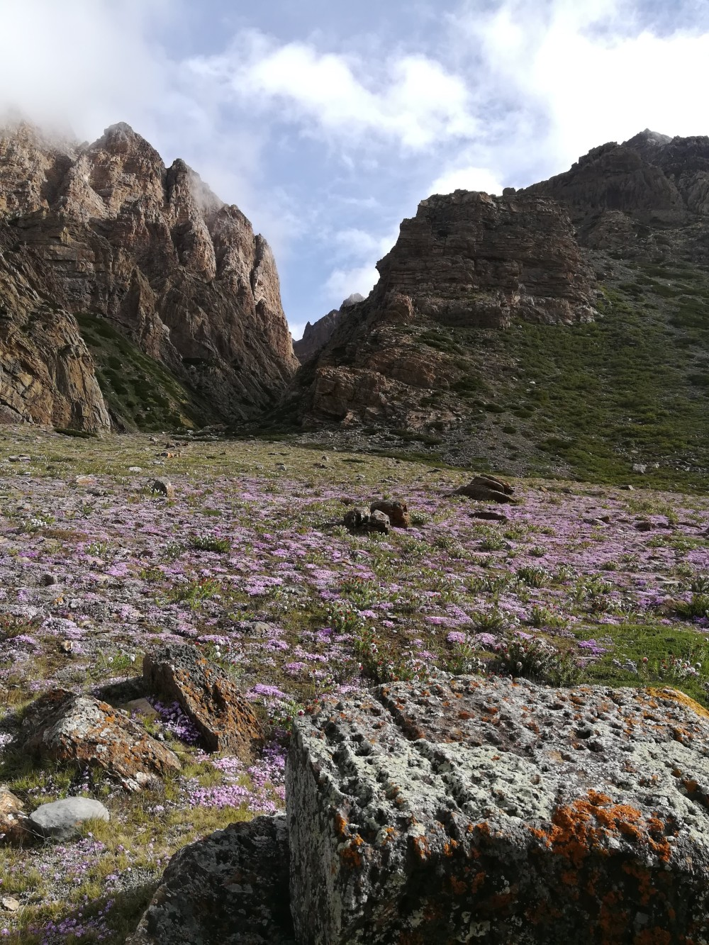 Flowers in bloom... Kailash Mansarovar Yatra 2018