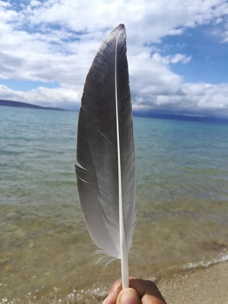 A feather discarded by a helpful gull